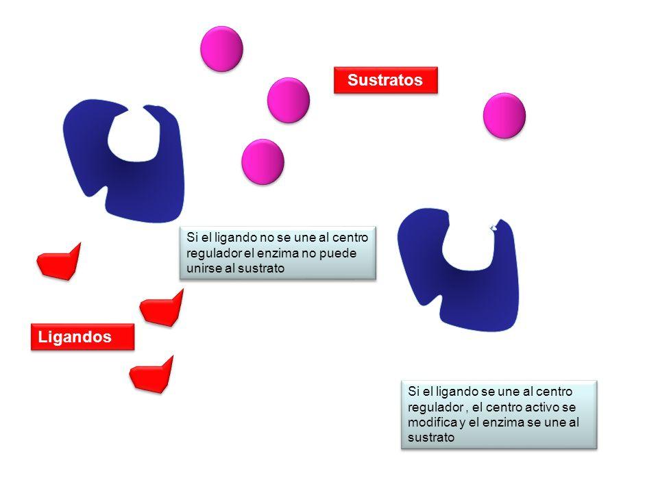 Sustratos Si el ligando no se une al centro regulador el enzima no puede unirse al sustrato. Ligandos.