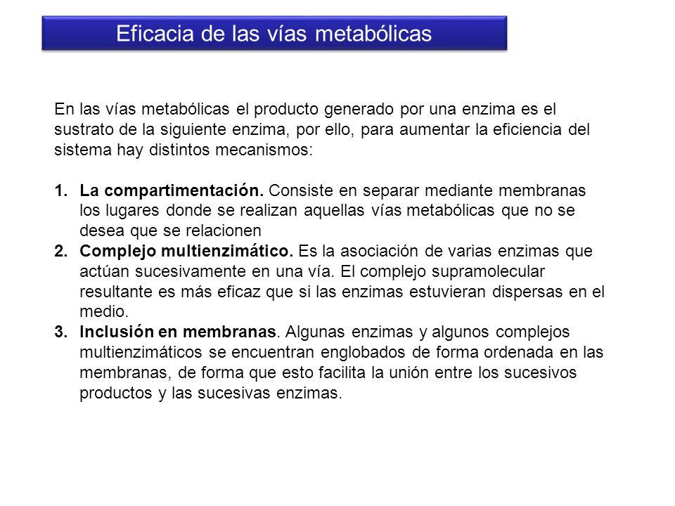 Eficacia de las vías metabólicas