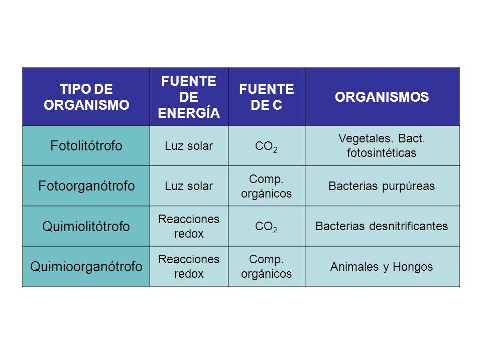 TIPO DE ORGANISMO FUENTE DE ENERGÍA FUENTE DE C ORGANISMOS