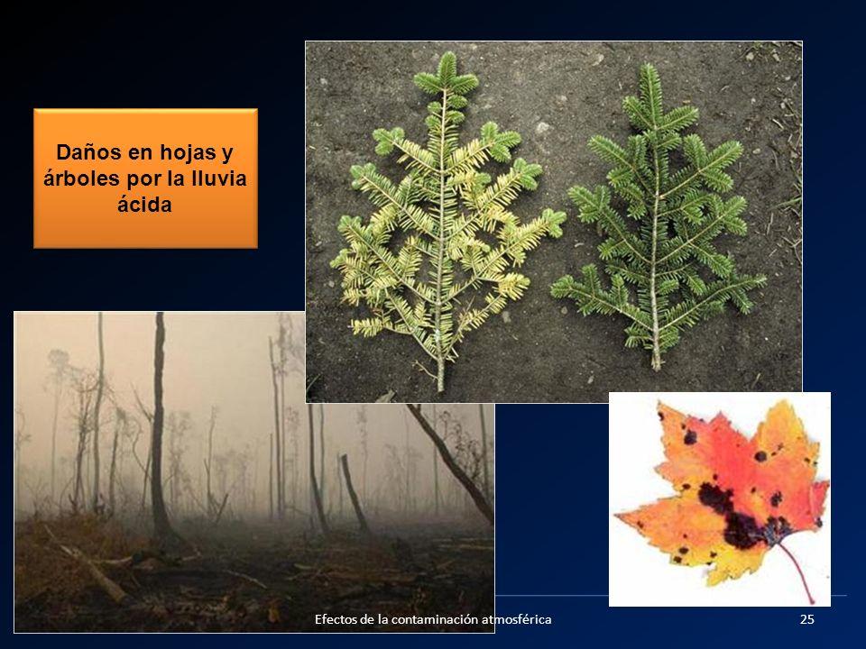 Daños en hojas y árboles por la lluvia ácida