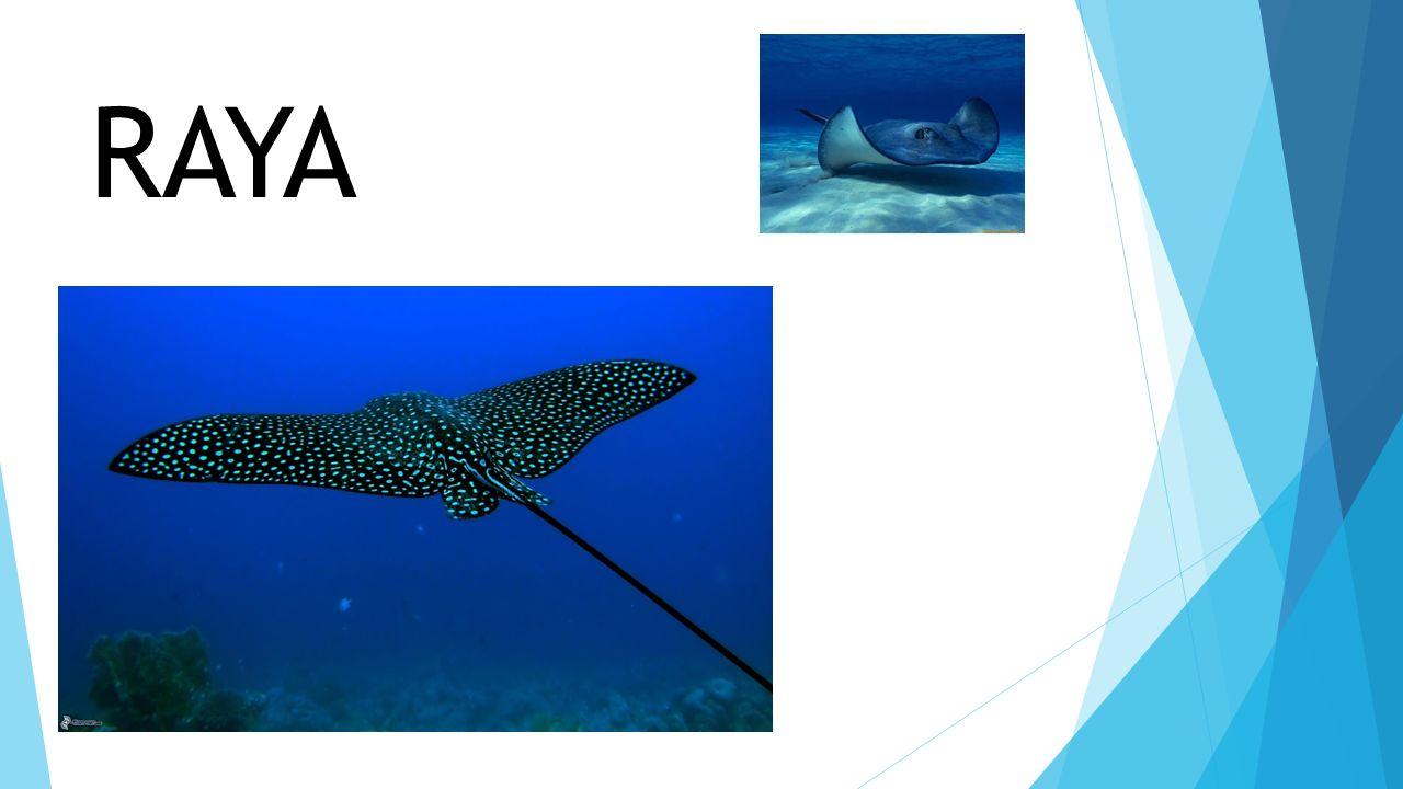 La beluga y el pez estrella