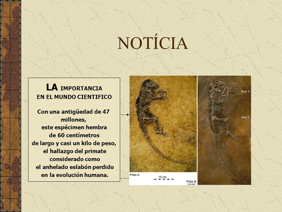 NOTÍCIA LA IMPORTANCIA EN EL MUNDO CIENTIFICO Con una antigüedad de 47