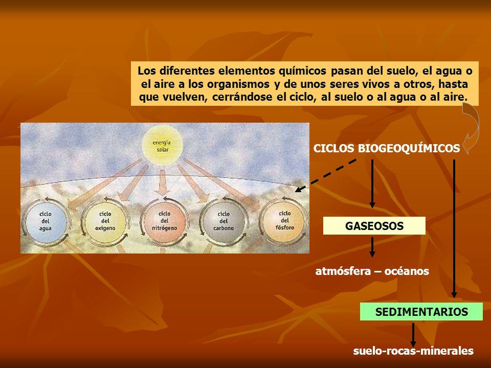 CICLOS BIOGEOQUÍMICOS suelo-rocas-minerales