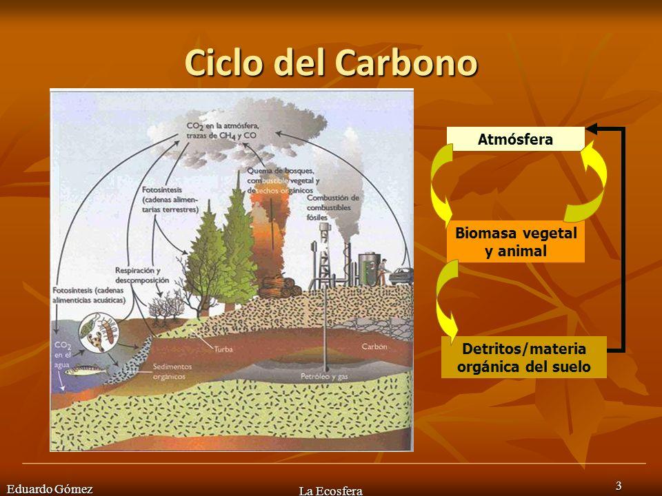 Biomasa vegetal y animal Detritos/materia orgánica del suelo