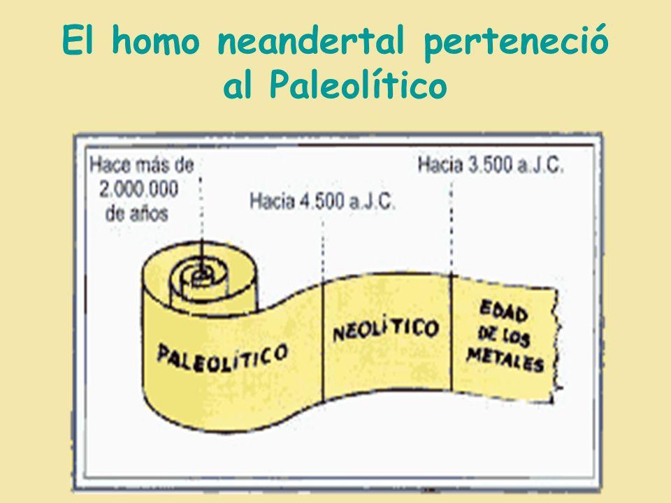 El homo neandertal perteneció al Paleolítico