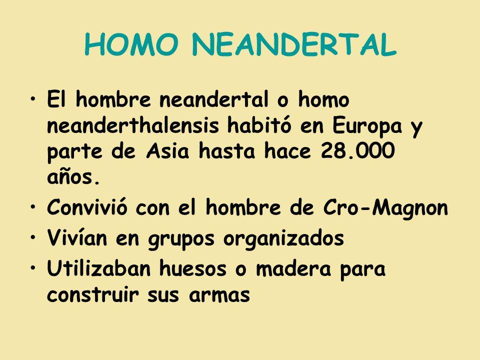 HOMO NEANDERTAL El hombre neandertal o homo neanderthalensis habitó en Europa y parte de Asia hasta hace 28.000 años.