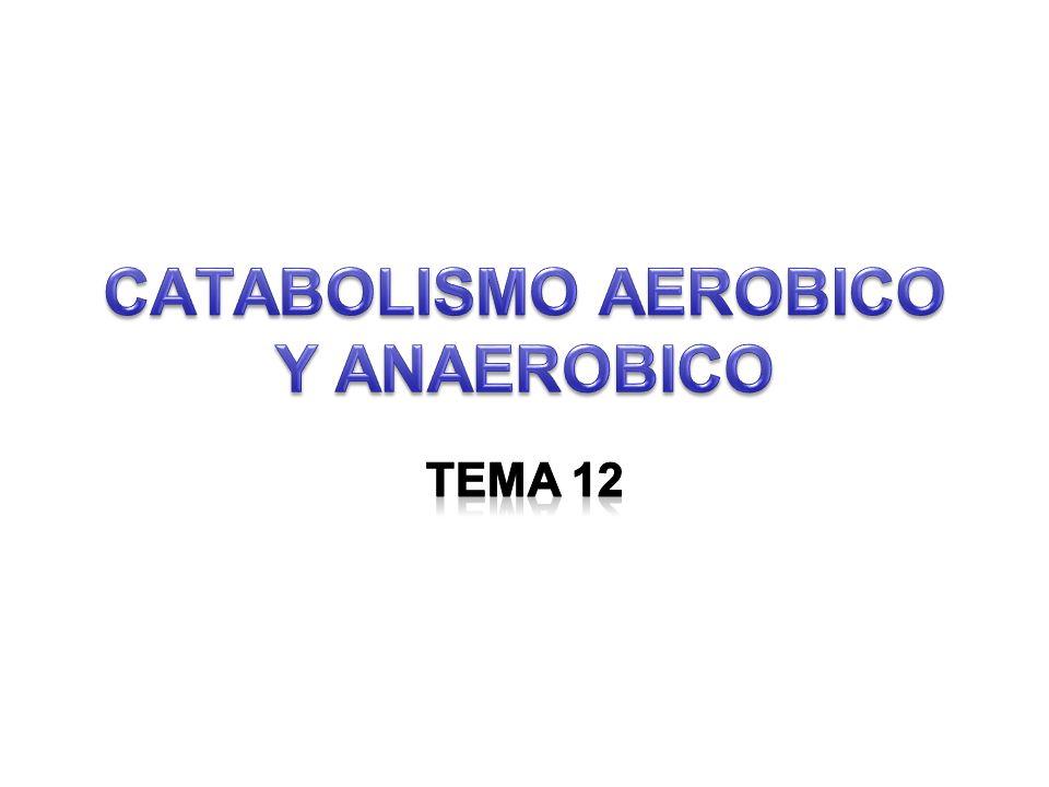 CATABOLISMO AEROBICO Y ANAEROBICO