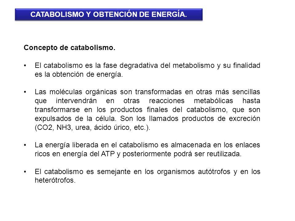CATABOLISMO Y OBTENCIÓN DE ENERGÍA.