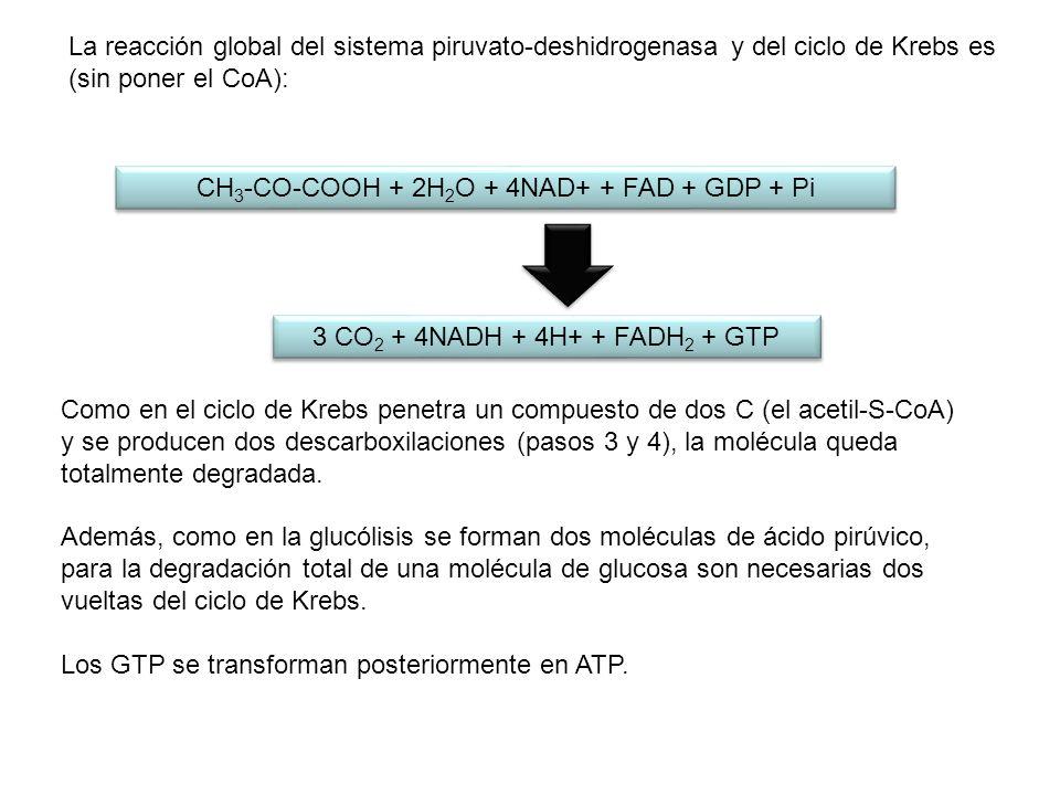 CH3-CO-COOH + 2H2O + 4NAD+ + FAD + GDP + Pi