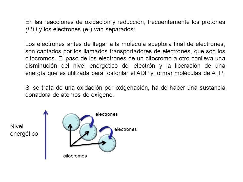 En las reacciones de oxidación y reducción, frecuentemente los protones (H+) y los electrones (e-) van separados: