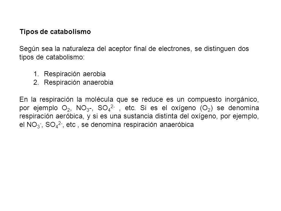 Tipos de catabolismo Según sea la naturaleza del aceptor final de electrones, se distinguen dos tipos de catabolismo: