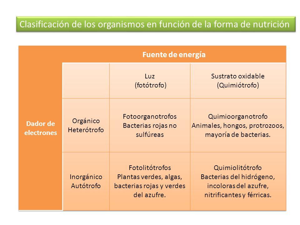Clasificación de los organismos en función de la forma de nutrición