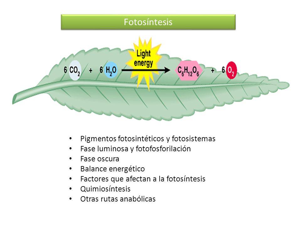 Fotosíntesis Pigmentos fotosintéticos y fotosistemas