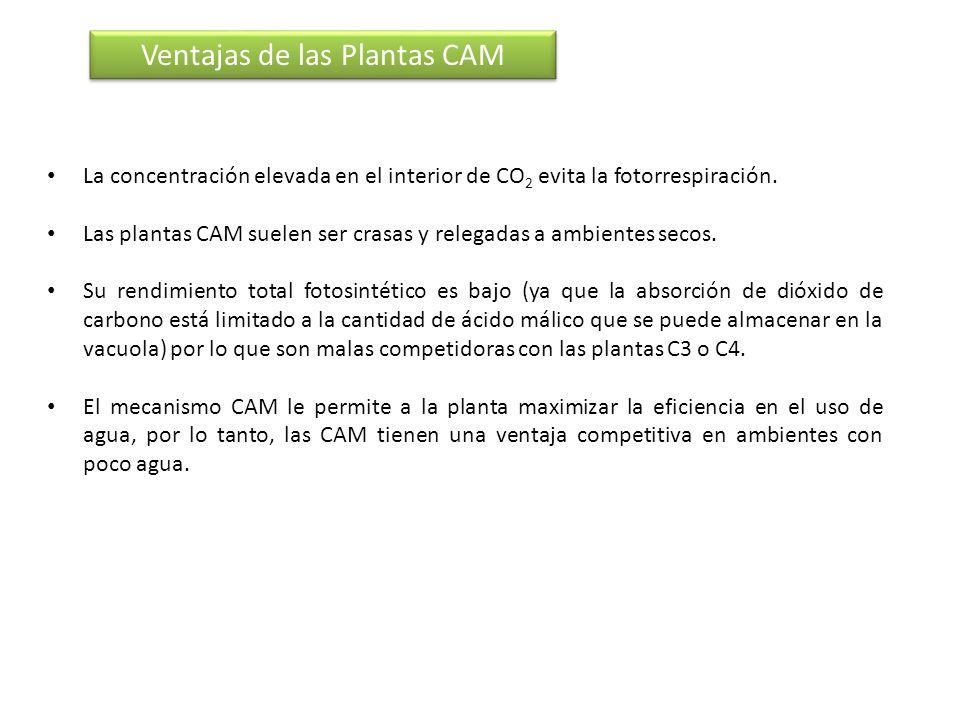 Ventajas de las Plantas CAM