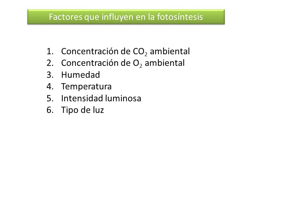 Factores que influyen en la fotosíntesis