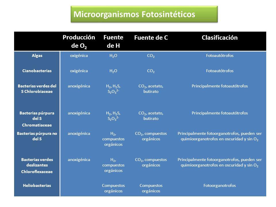 Microorganismos Fotosintéticos