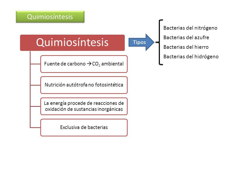 Quimiosíntesis Bacterias del nitrógeno Bacterias del azufre Tipos