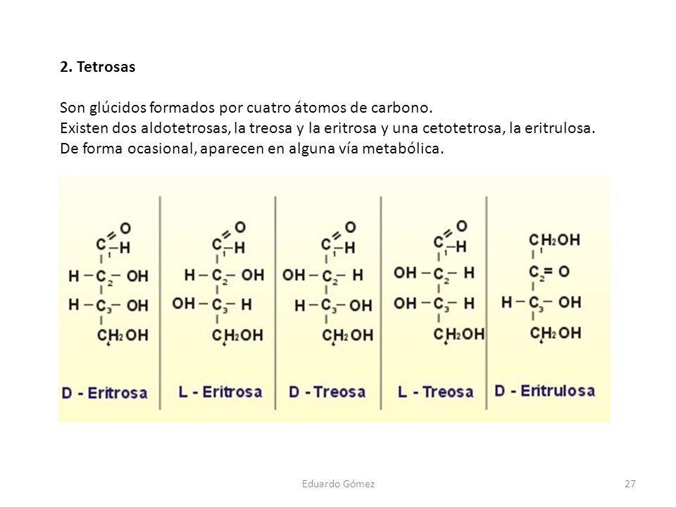 Son glúcidos formados por cuatro átomos de carbono.