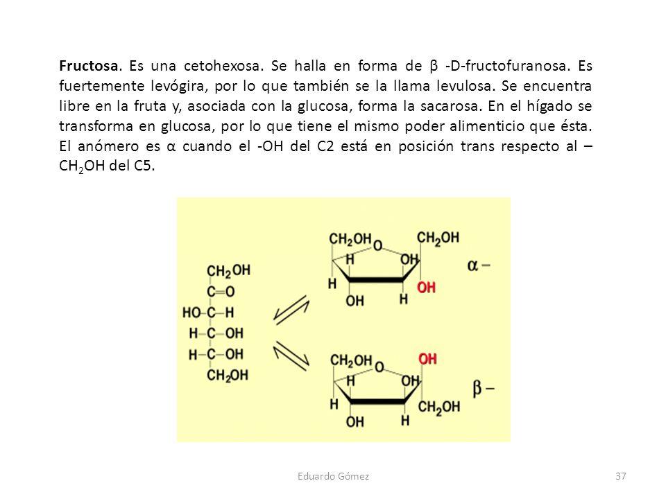 Fructosa. Es una cetohexosa. Se halla en forma de β -D-fructofuranosa