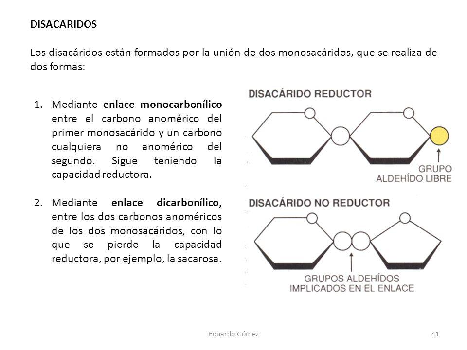 DISACARIDOS Los disacáridos están formados por la unión de dos monosacáridos, que se realiza de dos formas:
