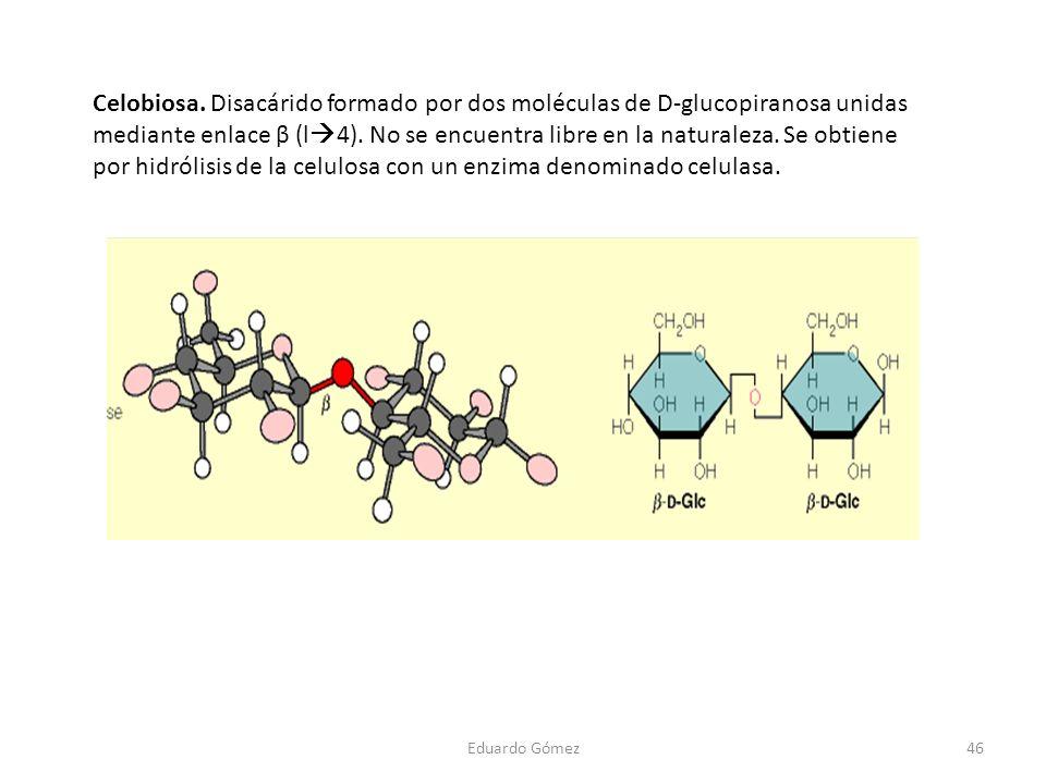 Celobiosa. Disacárido formado por dos moléculas de D-glucopiranosa unidas mediante enlace β (l4). No se encuentra libre en la naturaleza. Se obtiene por hidrólisis de la celulosa con un enzima denominado celulasa.