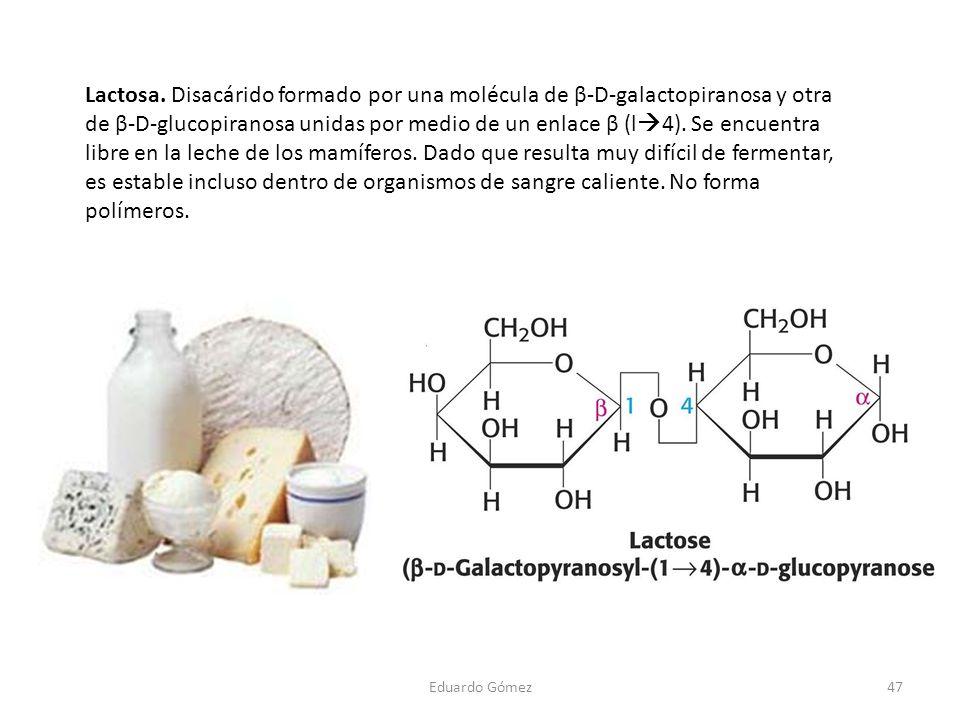 Lactosa. Disacárido formado por una molécula de β-D-galactopiranosa y otra de β-D-glucopiranosa unidas por medio de un enlace β (l4). Se encuentra libre en la leche de los mamíferos. Dado que resulta muy difícil de fermentar, es estable incluso dentro de organismos de sangre caliente. No forma polímeros.