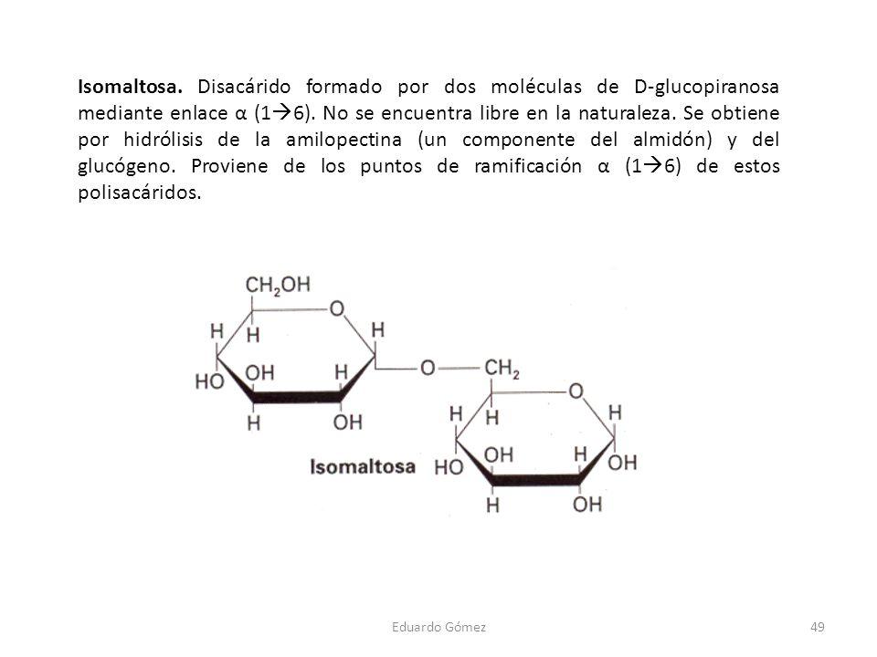 Isomaltosa. Disacárido formado por dos moléculas de D-glucopiranosa mediante enlace α (16). No se encuentra libre en la naturaleza. Se obtiene por hidrólisis de la amilopectina (un componente del almidón) y del glucógeno. Proviene de los puntos de ramificación α (16) de estos polisacáridos.