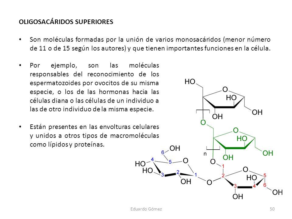 OLIGOSACÁRIDOS SUPERIORES