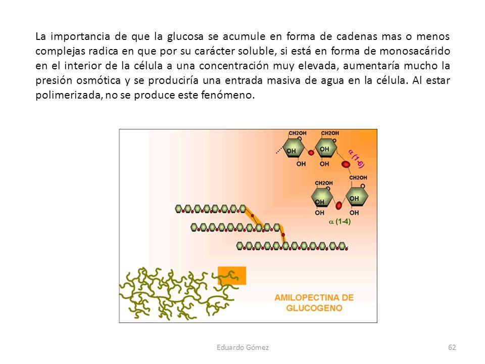 La importancia de que la glucosa se acumule en forma de cadenas mas o menos complejas radica en que por su carácter soluble, si está en forma de monosacárido en el interior de la célula a una concentración muy elevada, aumentaría mucho la presión osmótica y se produciría una entrada masiva de agua en la célula. Al estar polimerizada, no se produce este fenómeno.