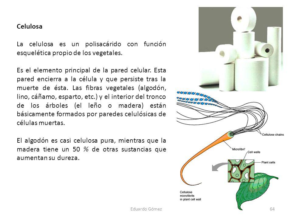 Celulosa La celulosa es un polisacárido con función esquelética propio de los vegetales.