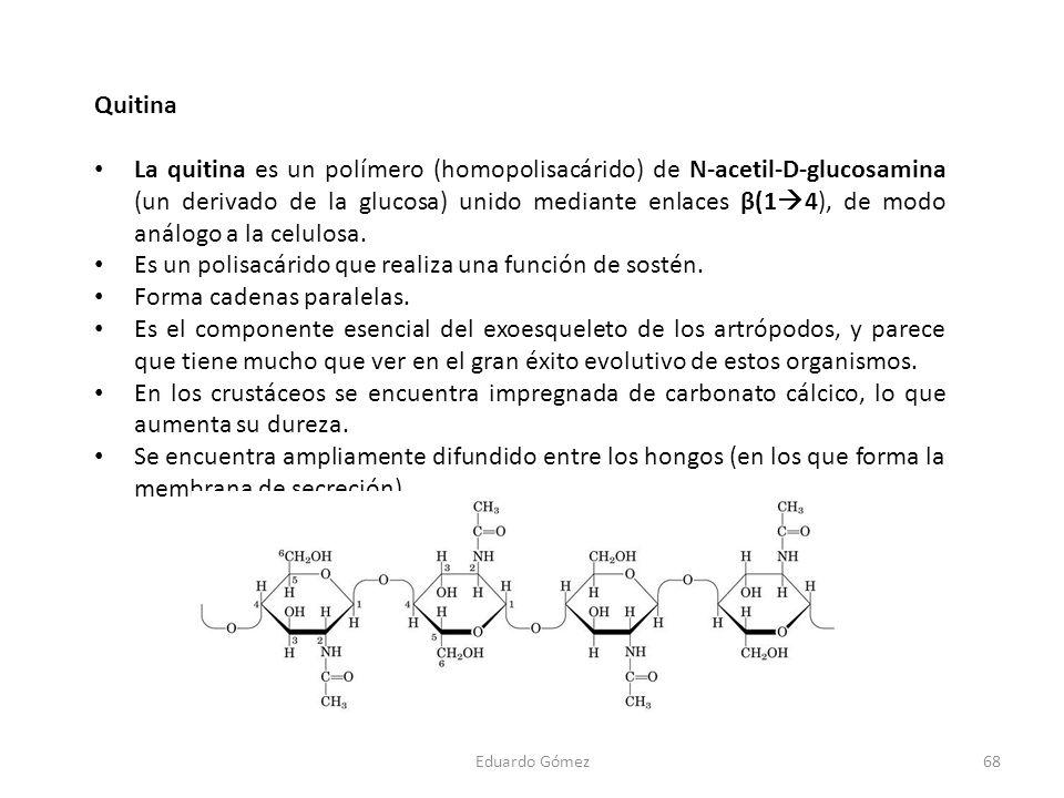 Es un polisacárido que realiza una función de sostén.