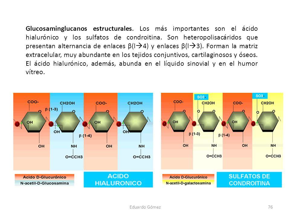 Glucosaminglucanos estructurales