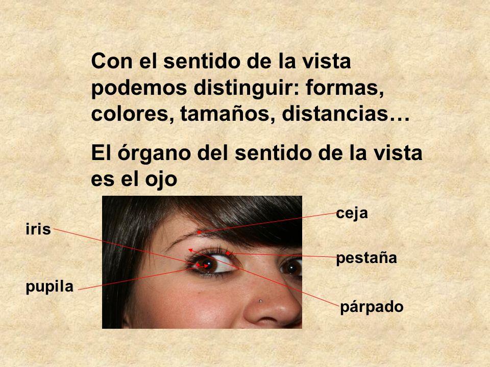 El órgano del sentido de la vista es el ojo