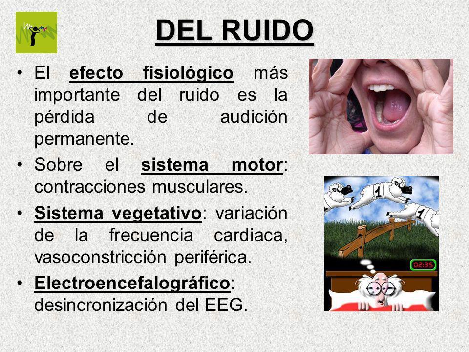 DEL RUIDO El efecto fisiológico más importante del ruido es la pérdida de audición permanente. Sobre el sistema motor: contracciones musculares.