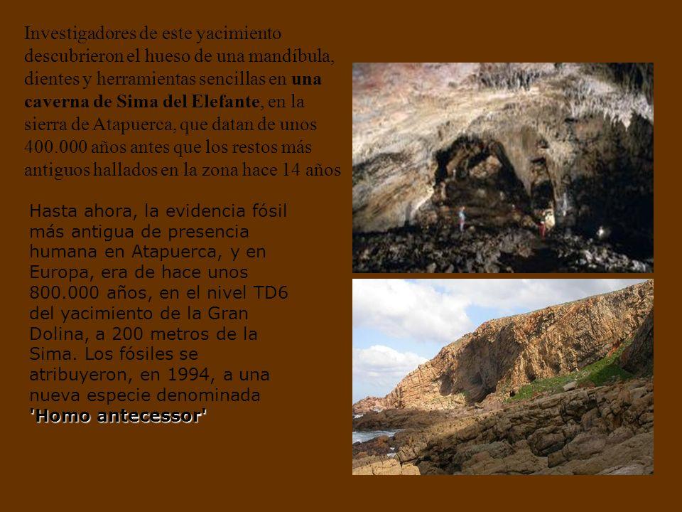 Investigadores de este yacimiento descubrieron el hueso de una mandíbula, dientes y herramientas sencillas en una caverna de Sima del Elefante, en la sierra de Atapuerca, que datan de unos 400.000 años antes que los restos más antiguos hallados en la zona hace 14 años