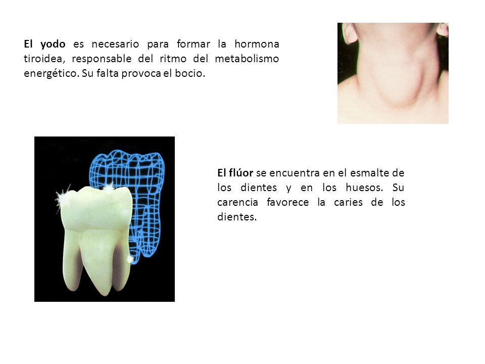 El yodo es necesario para formar la hormona tiroidea, responsable del ritmo del metabolismo energético. Su falta provoca el bocio.