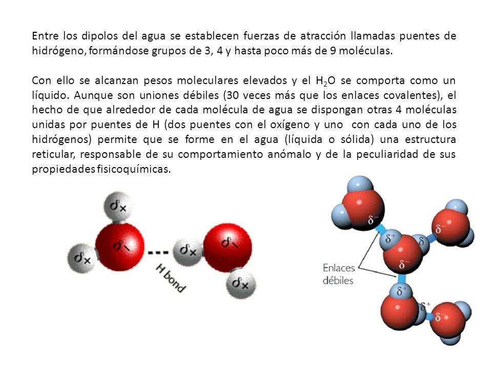 Entre los dipolos del agua se establecen fuerzas de atracción llamadas puentes de hidrógeno, formándose grupos de 3, 4 y hasta poco más de 9 moléculas.