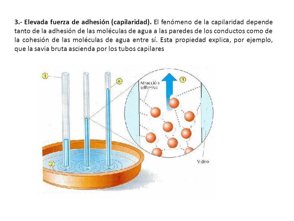 3. - Elevada fuerza de adhesión (capilaridad)