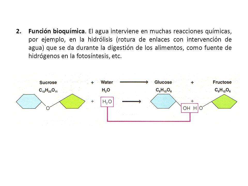 Función bioquímica.
