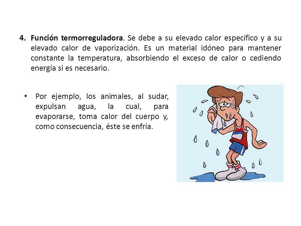 Función termorreguladora