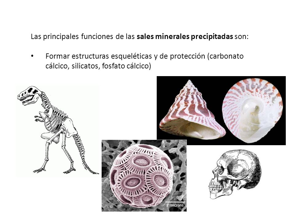 Las principales funciones de las sales minerales precipitadas son: