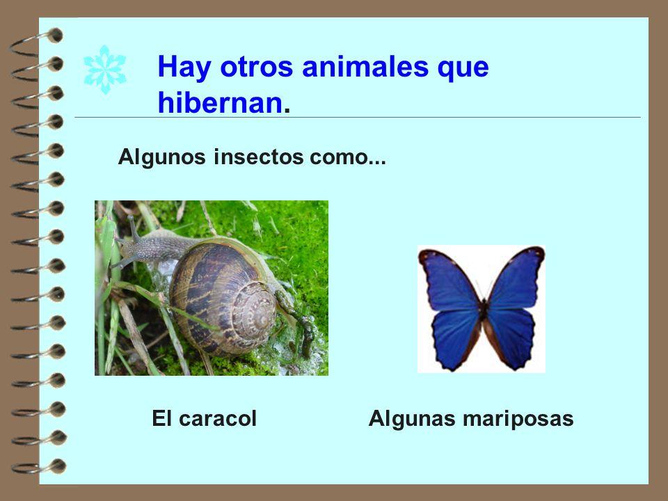 Hay otros animales que hibernan.
