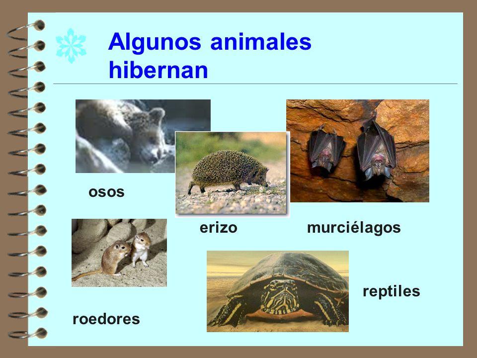 Algunos animales hibernan