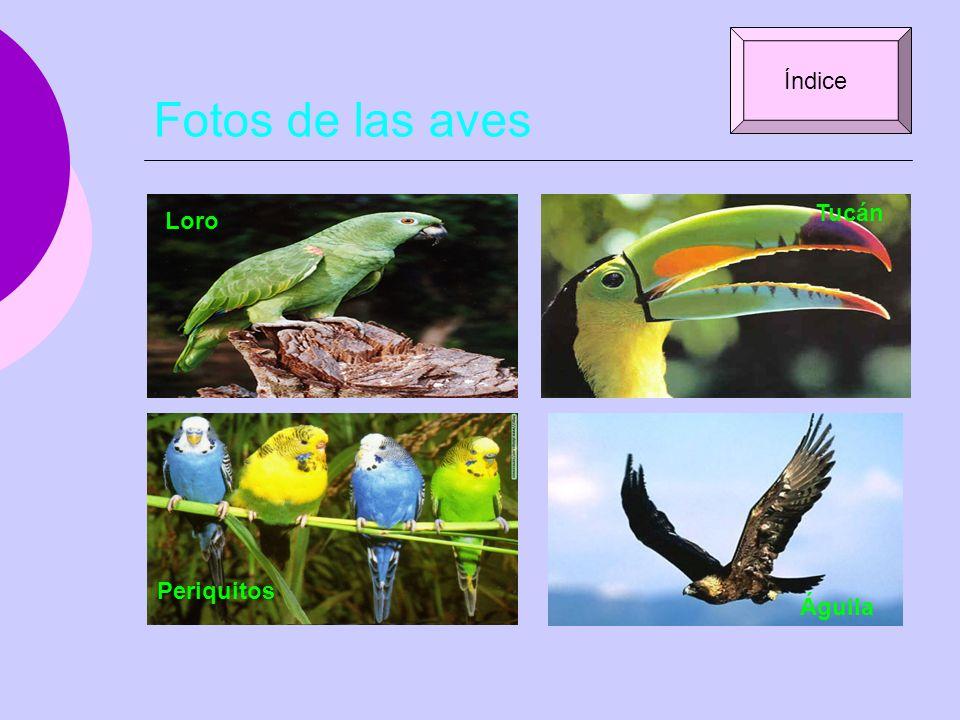 Fotos de las aves Índice Tucán Loro Periquitos Águila