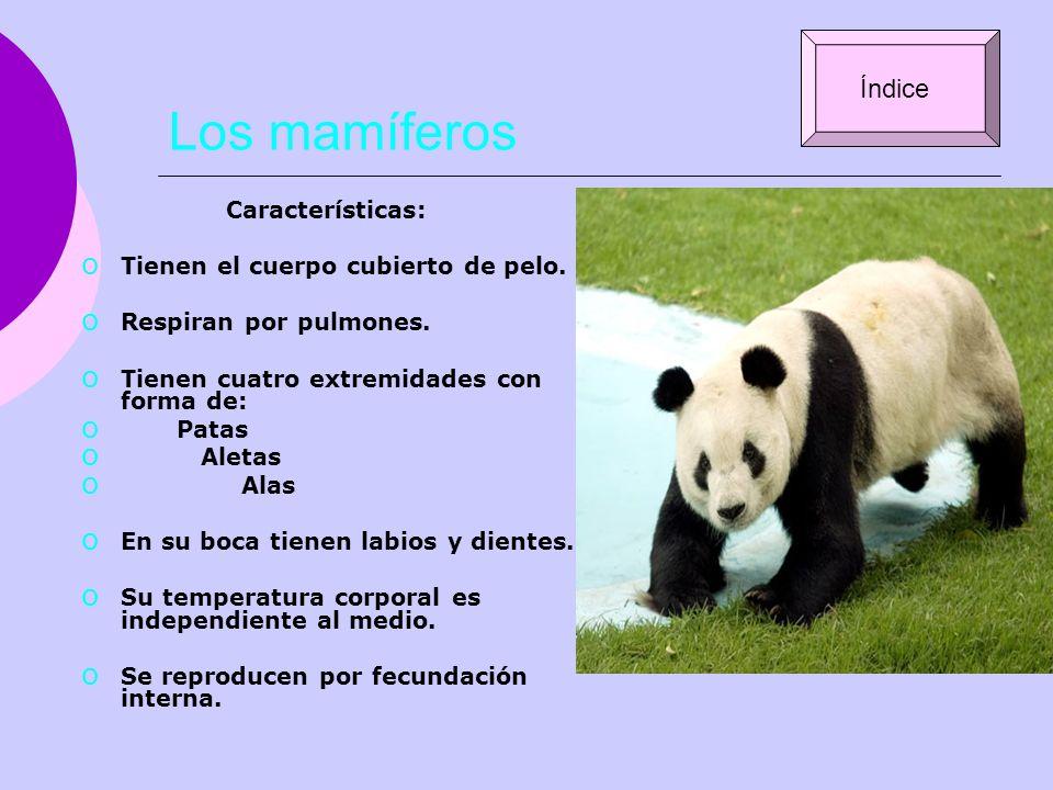 Los mamíferos Índice Características: