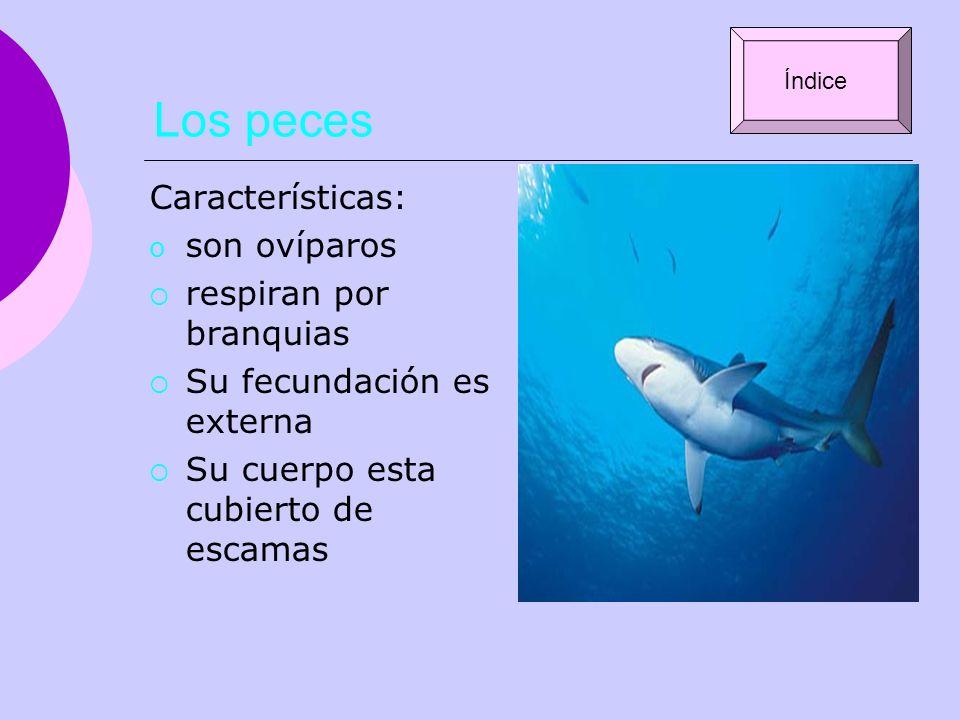 Los peces Características: son ovíparos respiran por branquias