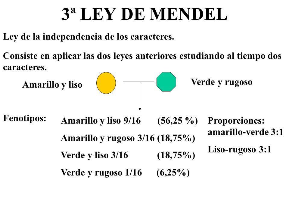 3ª LEY DE MENDEL Ley de la independencia de los caracteres.