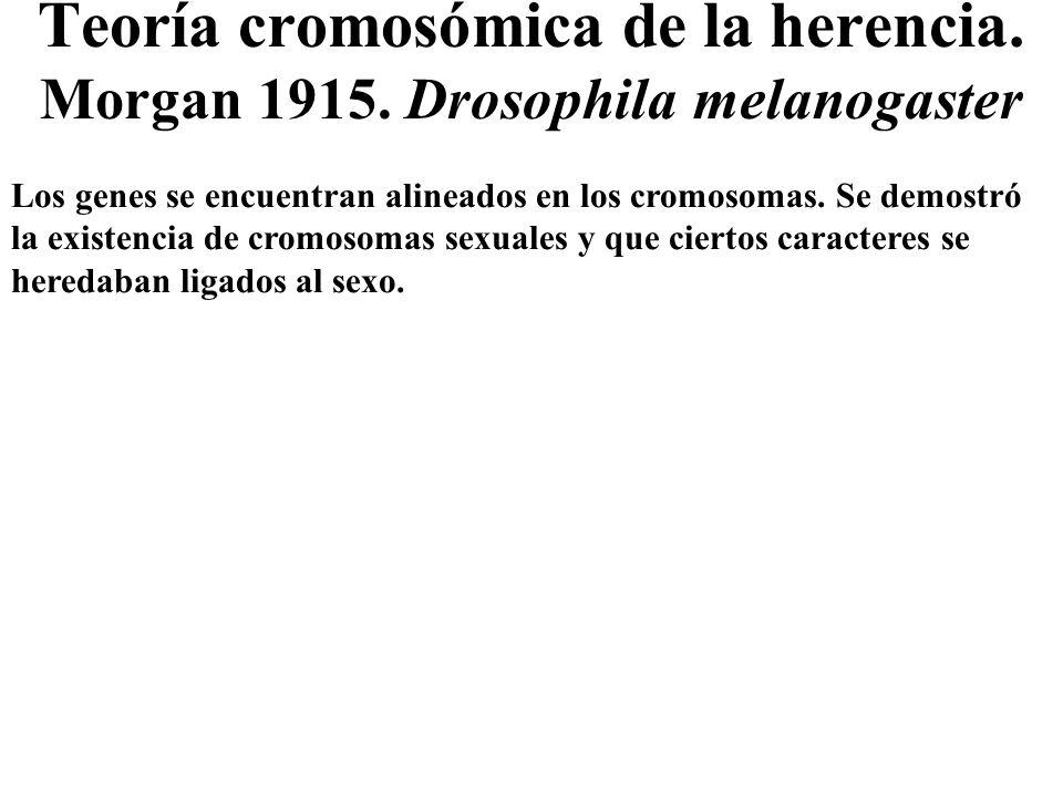 Teoría cromosómica de la herencia. Morgan 1915. Drosophila melanogaster
