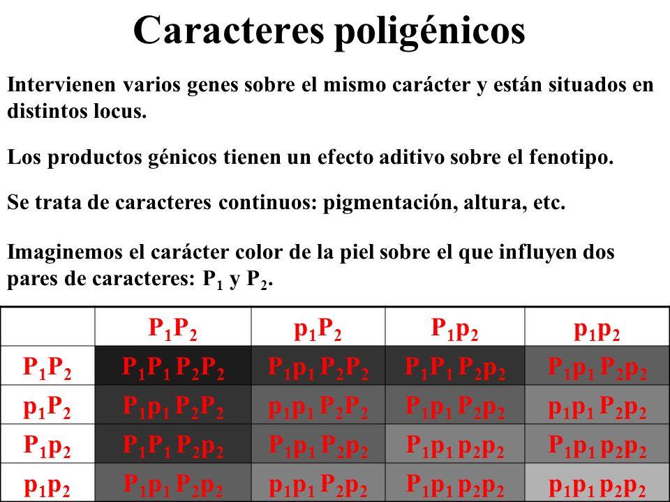 Caracteres poligénicos
