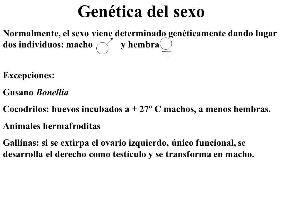 Genética del sexo Normalmente, el sexo viene determinado genéticamente dando lugar dos individuos: macho y hembra.